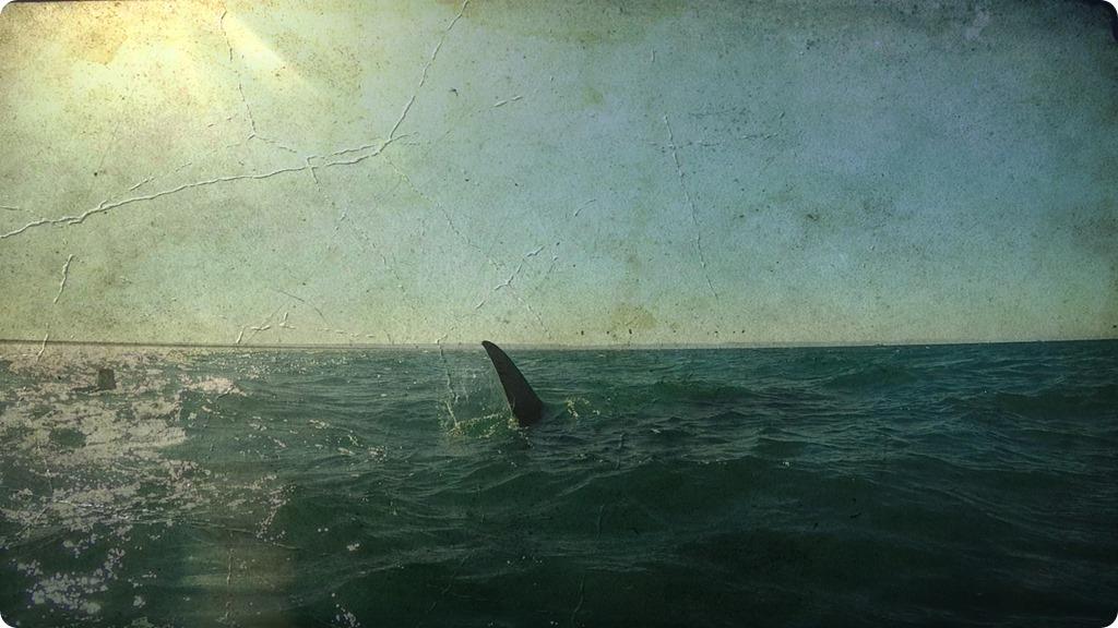 Whale Shark13