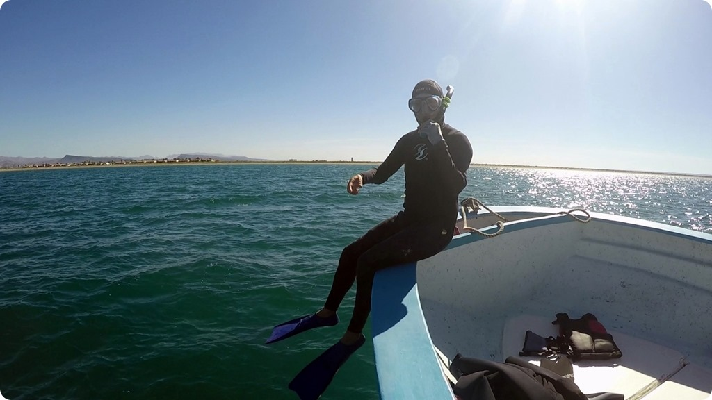 Whale Shark5